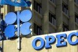 Panel OPEC+ sarankan pemangkasan produksi minyak diperpanjang terkait wabah virus corona