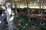 Untuk memenuhi kebutuhan daging nasional, Kota Kupang pasok 300 ekor sapi potong