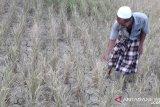 Jawa-Bali dan Nusa Tenggara potensi kekeringan meteorologis