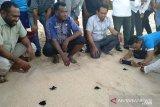 Warga Kota Jayapura lepasliarkan penyu lekang ke alam Pantai Base-G