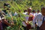 Pemerintah bentuk empat BUMDes penyangga produksi kelor di Malaka