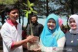 5.000 batang bibit mangrove ditanam di pantai tiram Padang Pariaman