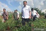 BRG waspadai penurunan muka air di Riau capai 1 meter, begini dampaknya