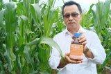Lahan rawa marjinal potensi besar jadi areal pertanian