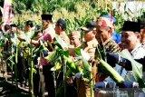 Petani Kotim didorong tingkatkan produksi jagung