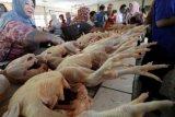 Disperindag: harga daging ayam di Yogyakarta ideal