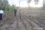 Kementan: kakao menjadi salah satu komoditas strategis nasional