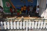 Kabupaten Garut jadi daerah pemasok anjing terbesar ke Sumatera