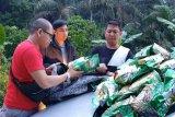 Polda Riau sita 10 kilogram sabu jaringan Malaysia