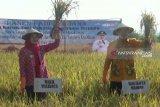 Pemkot Madiun imbau petani tanam padi organik