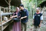 Anisa dan Dito berkisah ikut urus kambing Global Qurban