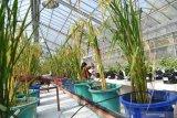 Petrokimia fokus kembangkan riset pertanian