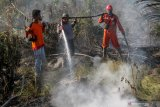 Manggala Agni continues fire-fighting efforts in Kampar peatland, Riau
