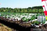 Generasi muda Kotim diajak kembangkan pertanian