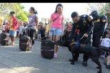 Petugas Bea Cukai mengarahkan seekor anjing pelacak (K9) narkotika untuk memeriksa barang bawaan penumpang saat simulasi dalam kegiatan 'Bea Cukai on The Street' di kawasan Renon, Denpasar, Bali, Minggu (14/7/2019). Kegiatan tersebut untuk memberikan edukasi dan mensosialisasikan upaya pemberantasan barang terlarang serta tugas-tugas Bea Cukai kepada masyarakat. ANTARA FOTO/Fikri Yusuf/nym.