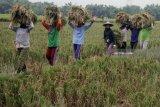 Kementan mendorong penyuluh percepat pertumbuhan korporasi pertanian