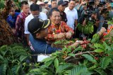 Harga biji kopi di Lampung turun