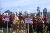 Pusri bantu peningkatan produksi bawang merah di Solok