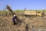 Pekerja memanen tebu di Jatitujuh, Majalengka, Jawa Barat, Selasa (16/7/2019). Pemerintah menargetkan produksi gula nasional pada tahun 2019 sebesar 2,24 juta ton. ANTARA JABAR/Dedhez Anggara/agr