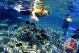 Pemprov Sulawesi Utara bentuk tim revitalisasi kawasan wisata Bunaken
