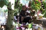 Tokoh adat memanjatkan doa dibawah pohon kopi saat berlangsungnya Tradisi Upacara Petik Kopi di Perkebunan Kopi Kawi Sari, Blitar, Jawa Timur, Rabu (17/7/2019). Tradisi upacara untuk menandai awal musim panen buah kopi tersebut sebagai wujud rasa syukur kepada tuhan dan alam semesta seraya memanjatkan doa agar hasil panen kopi melimpah dengan kualitas buah kopi yang bagus. Antara Jatim/Irfan Anshori/zk.