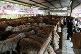 Global Kurban-ACT kelola hewan kurban sejak pembibitan untuk kebutuhan Idul Adha