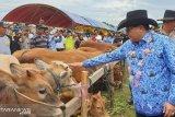 Pemkab Poso gelar kontes sapi dan panen pedet