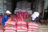 Bantul mengajukan bantuan benih padi varietas umur pendek