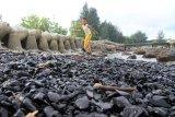 Seorang anak bermain di pinggir pantai yang tercemar limbah batubara di kawasan pantai wisata Desa Suak Indra Puri, Aceh Barat, Aceh, Kamis (18/7/2019). Keberadaan limbah batubara yang diduga milik salah satu perusahan di Kabupaten setempat dapat merugikan warga yang berjualan di kawasan pantai karena minimnya pengunjung serta menurunya hasil tangkapan nelayan tradisional. ANTARA FOTO/Syifa Yulinnas/nym.