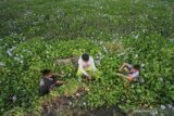 Warga Limboto manfaatkan Eceng Gondok menjadi kerajinan tangan
