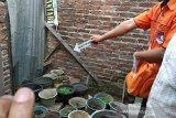 Polisi tangkap dua orang pemilik 35 pot ganja di Bandung