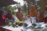 Kelompok tani wanita Tangerang produksi sayuran nonpestisida
