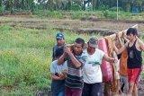 Seorang warga Muko-Muko tewas tersambar petir