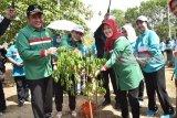 Gubernur Sumsel: Jaga lingkungan sekitar