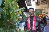 Yogyakarta mendorong kampung sayur ikut andil kendalikan inflasi