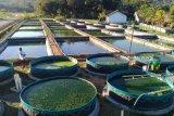 Produksi ikan budidaya di Kulon Progo mencapai 6.819 ton