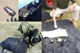 Polisi pastikan benda gegerkan warga Palu bukan bom