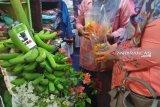 Pisang roti seberat 50 kilogram asal Solok Selatan dipamerkan di Padang
