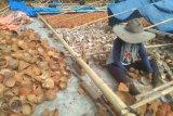 BUMNag Mutiara Mandiri Pesisir Selatan ekspor kopra putih ke Timur Tengah