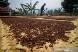 Harga cengkih Sulawesi utara naik tipis