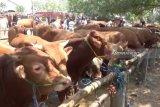 Kementan tingkatkan pengawasan lalu lintas  perdagangan hewan kurban