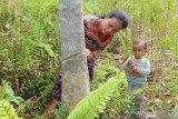 Mengukur peradaban bangsa di Kalimantan hingga konsep ibu kota baru [VIDEO]