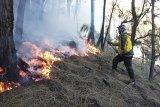 Hutan lereng Gunung Arjuno Jatim kembali terbakar