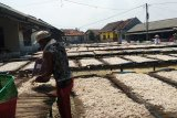Pasokan melimpah, harga teri asin di Pulau Pasaran turun tipis