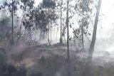 Sudah 100 hektare gambut terbakar di Kotim