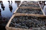 Nilai ekspor produk perikanan Indonesia