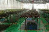 PT Vale siapkan 700 ribu tanaman untuk reklamasi lahan pascapengolahan tambang
