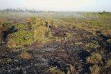 Foto udara lokasi kebakaran hutan dan lahan di kawasan Ketapang Tanjungpura Km 4 di Desa Sungai Awan Kiri, Kecamatan Muara Pawan, Kabupaten Ketapang, Kalimantan Barat, Selasa (30/7/2019). Hingga kini belum diketahui secara pasti penyebab kebakaran yang menghanguskan puluhan hektar lahan yang berada tidak jauh dari lokasi pelepasliaran Orangutan tersebut. ANTARA FOTO/HO/Heribertus/jhwANTARA FOTO/HERIBERTUS (ANTARA FOTO/HERIBERTUS)