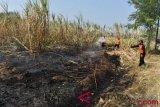 Lahan perkebunan tebu PTPN VII  terbakar