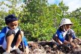 Japesda inisiasi penanaman bakau di Torosiaje